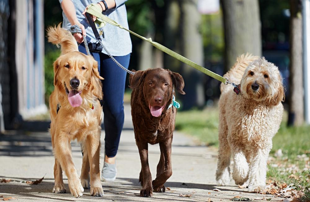 dog-walking-bus